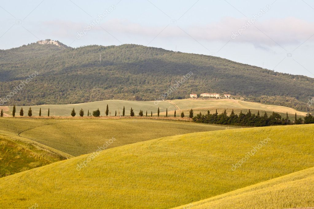 Tuscany Hills at Sunrise  Stock Photo #6071807