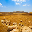 Stock Photo: Israel Desert