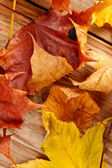 Dried leaves — Stock Photo