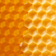 Fresh honey in comb — Zdjęcie stockowe