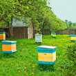 Stock Photo: Beehives