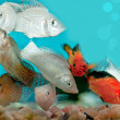 Stock Photo: Aquarium