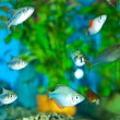 Royalty-Free Stock Photo: Aquarium