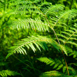 Fern — Stock Photo #6073288