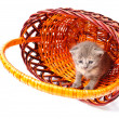 Little kitten in basket — Stock Photo