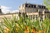 Dresden and flowers — Stock Photo
