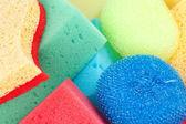 Sponges close up — Stock Photo