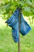 Blue jeans colgando de un árbol — Foto de Stock
