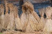 Sheaves of wheat — Stock Photo
