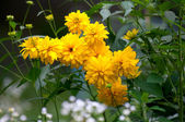 Yellow flowers — Foto Stock