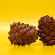 Cedar Cones — Stock Photo #5428884