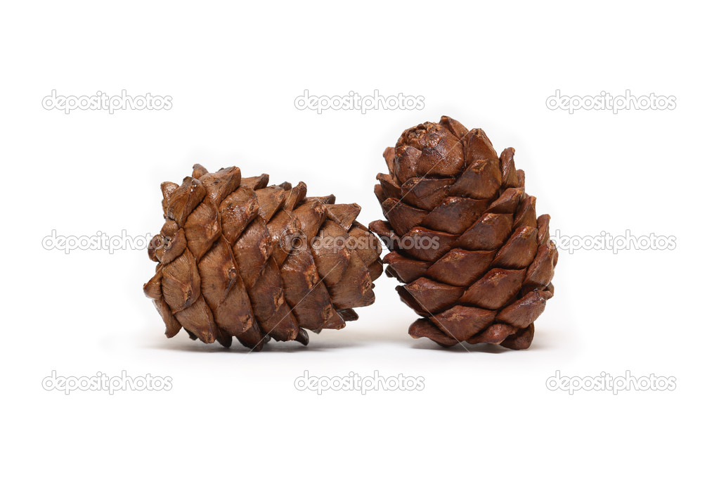 Two cedar cones on white background — Stok fotoğraf #5428881