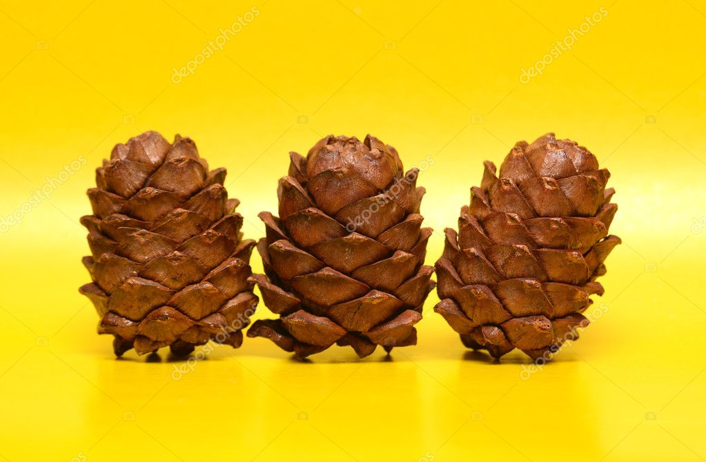 Two cedar cones on yellow background — Stock Photo #5428888