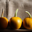 Pumpkins On Canvas — Stock Photo