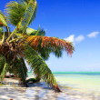 Coconut palm above the sea — Stock Photo #5883899