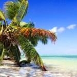 Coconut palm above the sea — Stock Photo