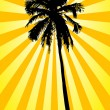 Silhouette of palms — Stock Photo