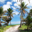 Path on caribbean beach - Stock Photo