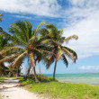 Stock Photo: Coconut palms on beach