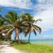Coconut palms on beach — Stock Photo