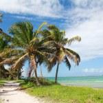 Coconut palms on beach — Stock Photo