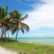 Palms on caribbean sea coastline — Stock Photo