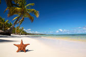 Starfish on tropical beach with palm — Stock Photo