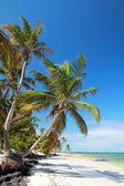 Bellissima palma sull'oceano atlantico — Foto Stock