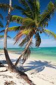 Palm on tropical beach — Stock Photo