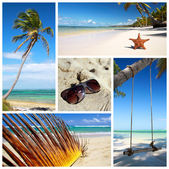 Tropical collage — Stock Photo