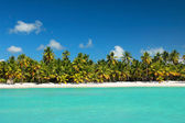 Palms coastline on caribbean beach — Stock Photo