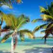 Palms on caribbean sea beach — Stock Photo #6266857