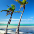 Two palms on caribbean sea beach — Stock Photo #6267969