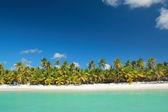 Palms on tropical beach — Stock Photo