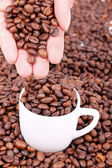 Kaffebönor i hand — Stockfoto