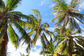 Palms on tropical sky background — Stock Photo