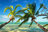 Beautiful palms on tropical beach — Stock Photo