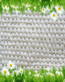 белые ромашки на фоне плетеной — Стоковое фото