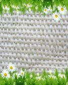 Bílé camomiles na wattled pozadí — Stock fotografie