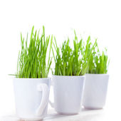Green grass in coffee cups — Stock Photo