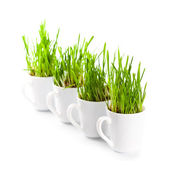 Green grass in coffee cups c — Stock Photo