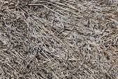 Gray old dead grass nature background — Stock Photo