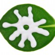 Sun protective (sunblock) cream sample over green clusia leaf, i - Stock Photo