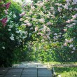 Park alley with violet and white lilac bushes — Stock Photo