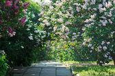 紫と白のライラック薮と公園の路地 — ストック写真