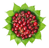 Many red wet cherry fruits (berries) on green leaves in round pl — Stock Photo