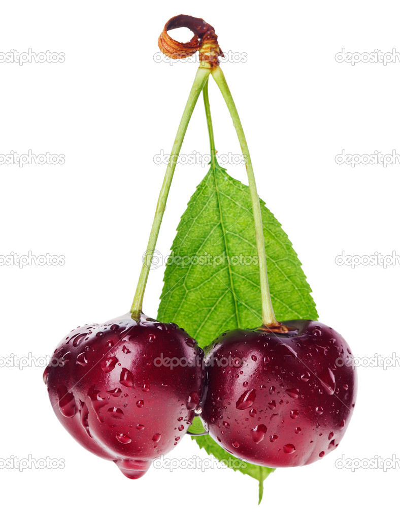 Pair of red wet cherry fruit on stem with green leaf isolated on white — Stock Photo #6198173