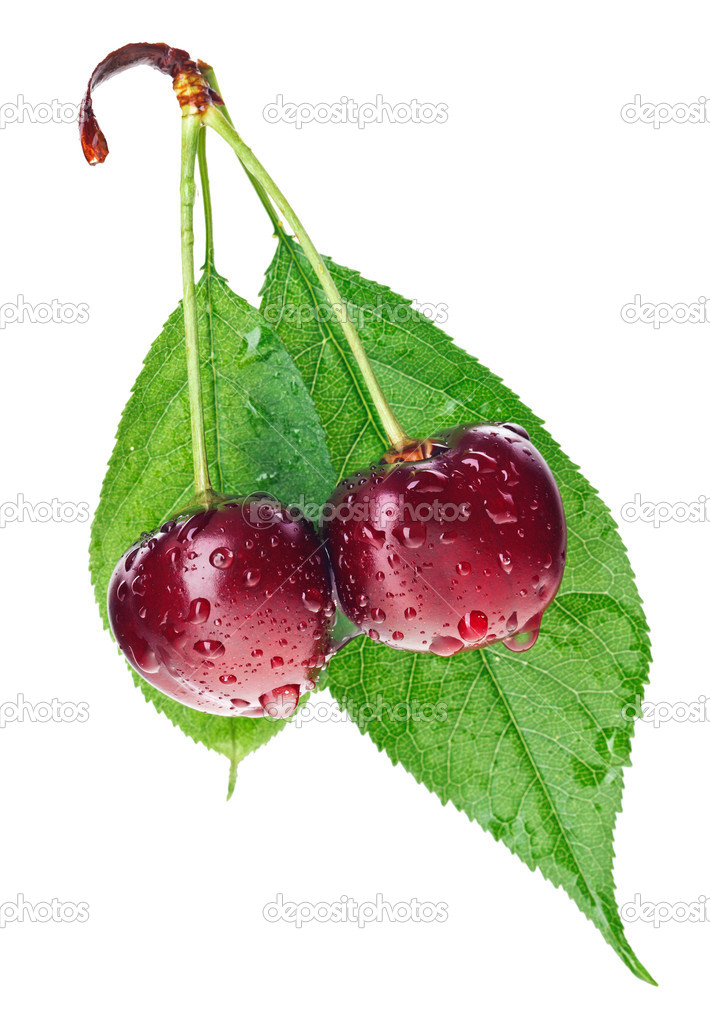 Pair of red wet cherry fruit on stem with green leaf isolated on white — Stock Photo #6198180