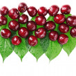 Many red wet cherry fruits (berries) on green leaves, isolated w — Stock Photo #6297612