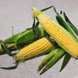 Still life with three indian corn ears on gray linen canvas - Stock Photo